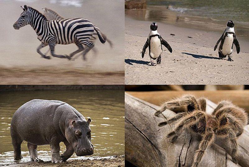 inapp00 10 видов животных, которых можно встретить в неожиданных местах