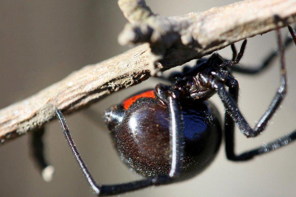 Insects06 25 самых опасных насекомых