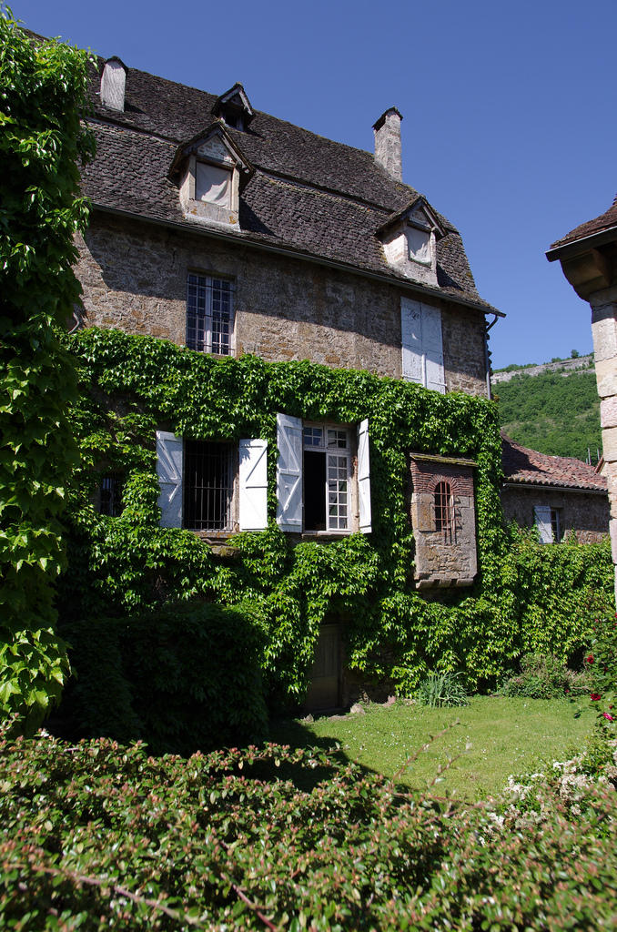 ivy15 Дома, утопающие в зелени