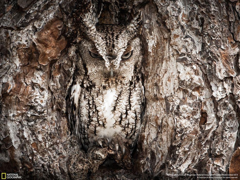 natgeocontest05 Лучшие фотографии о путешествиях от National Geographic