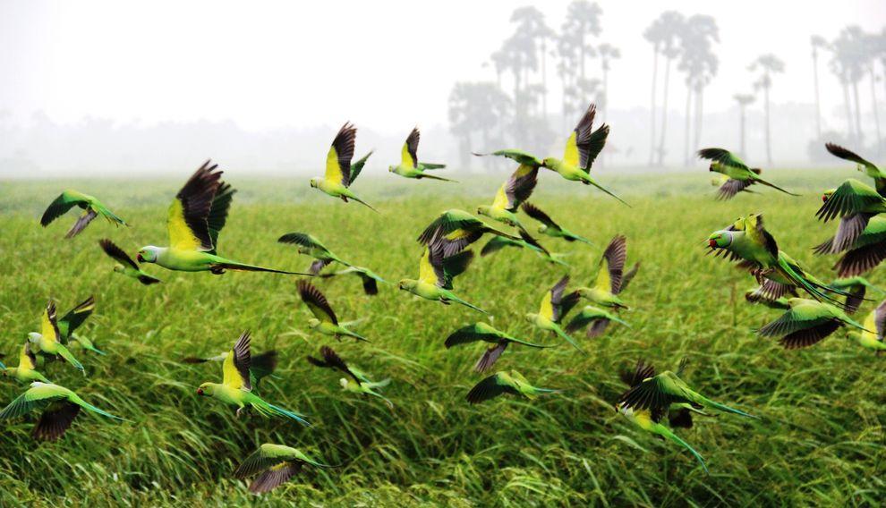 natgeocontest15 Лучшие фотографии о путешествиях от National Geographic