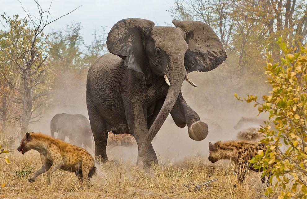 natgeocontest16 Лучшие фотографии о путешествиях от National Geographic