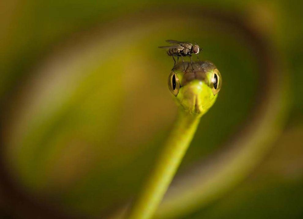 natgeocontest37 Лучшие фотографии о путешествиях от National Geographic