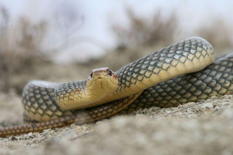 Как правильно фотографировать змей
