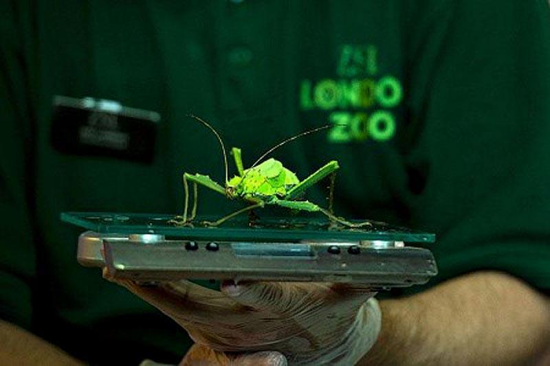 zooweight14 18 самых необычных фотографий, показывающих, как взвешивают животных