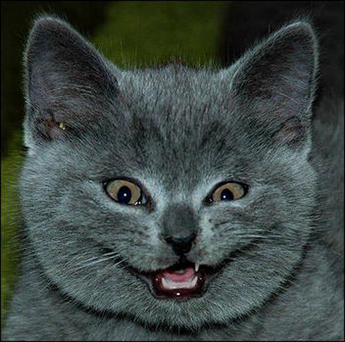 Кошки готовы смеяться над вашей бедой. «Твой хомяк? Да, я его съела!»