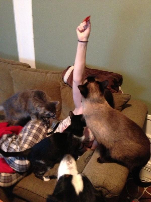 19. А кошки видят в вас только источник пропитания.