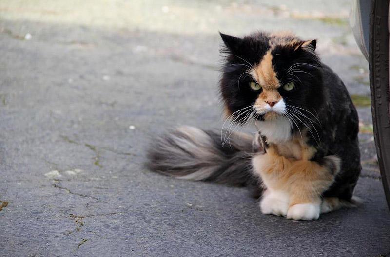 Кошки живут ради того, чтобы посмотреть, как вы умрете.
