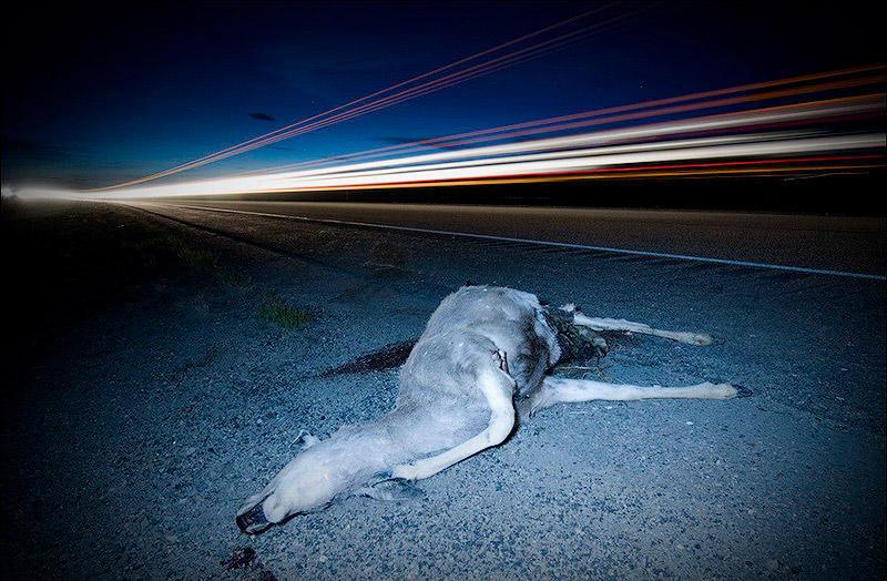 2. Мясо животных, погибших на дорогах