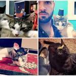 Котики в шапочках