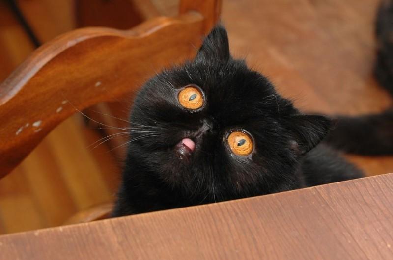 Blackberry20 800x530 Лучшая кошка этого сезона   Черника