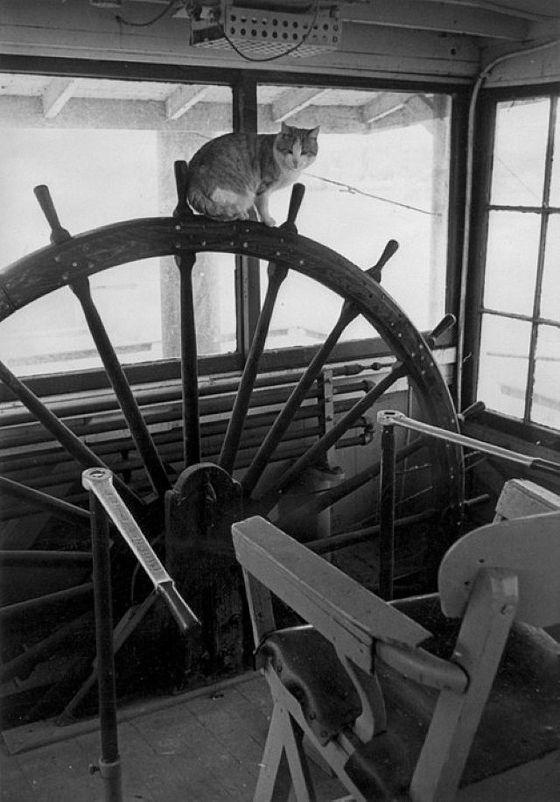 CatsAtSea02 Как кошки в море ходили