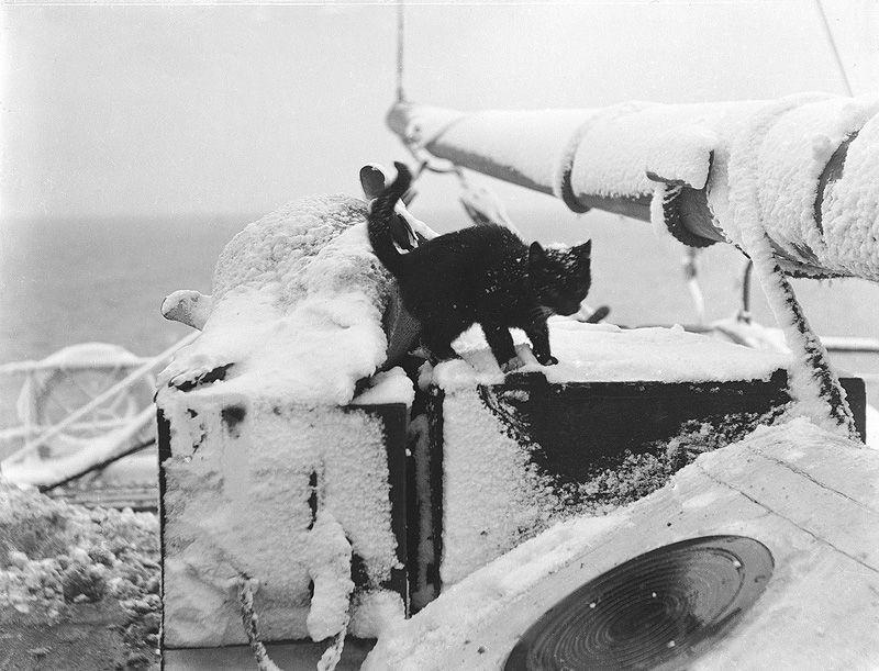 Кошки – морские волки!