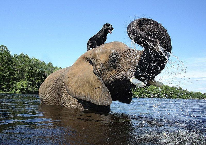Friendship04 Лучшие друзья   собака и слон