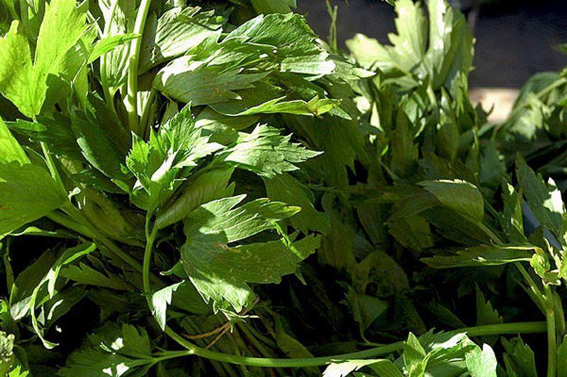 HerbalTea09 10 лучших травяных чаев для похудения