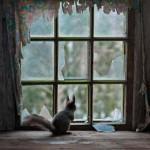 Кай Фагерстром – Дом в лесах