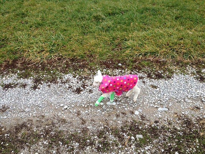 Maisie10 Очаровательная овечка Мейзи