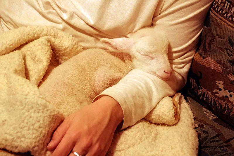 Maisie24 Очаровательная овечка Мейзи