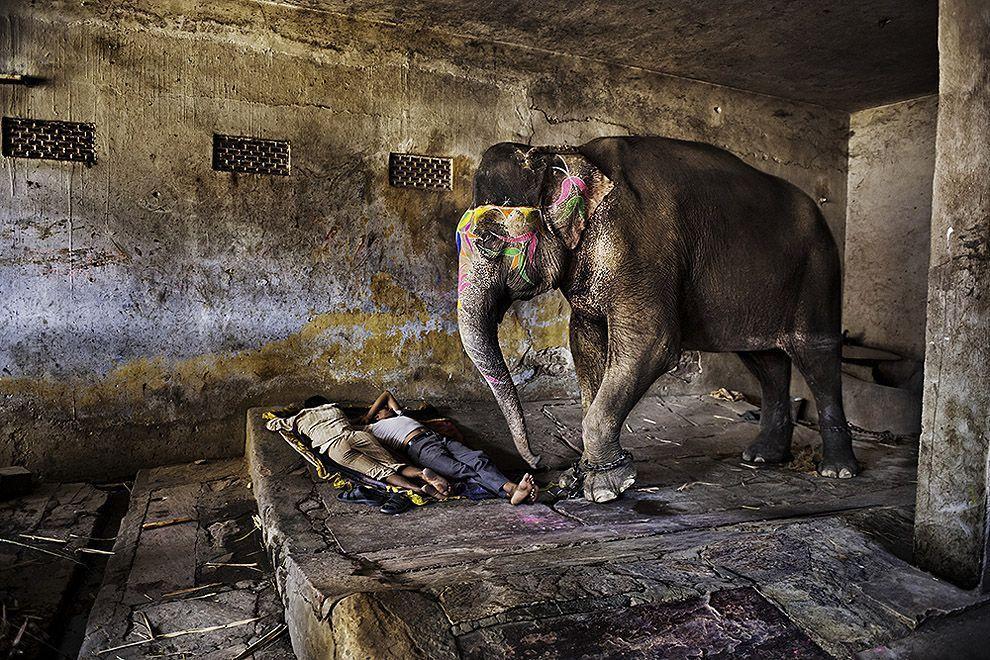 McCurry09 Самые красивые фотографии Стива Мак Карри со всего света