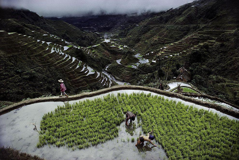 McCurry15 Самые красивые фотографии Стива Мак Карри со всего света
