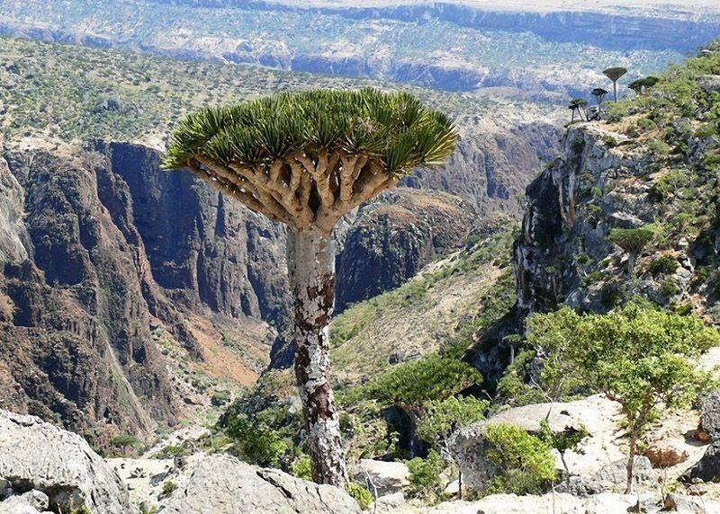 Socotra02 Удивительный остров Сокотра