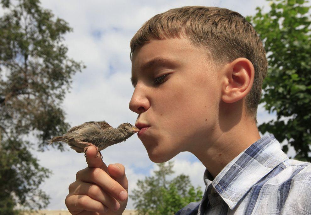 boy n sparrow01 Мальчик и воробей