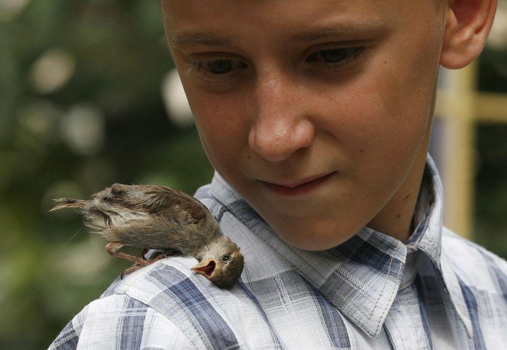 boy n sparrow05 Мальчик и воробей