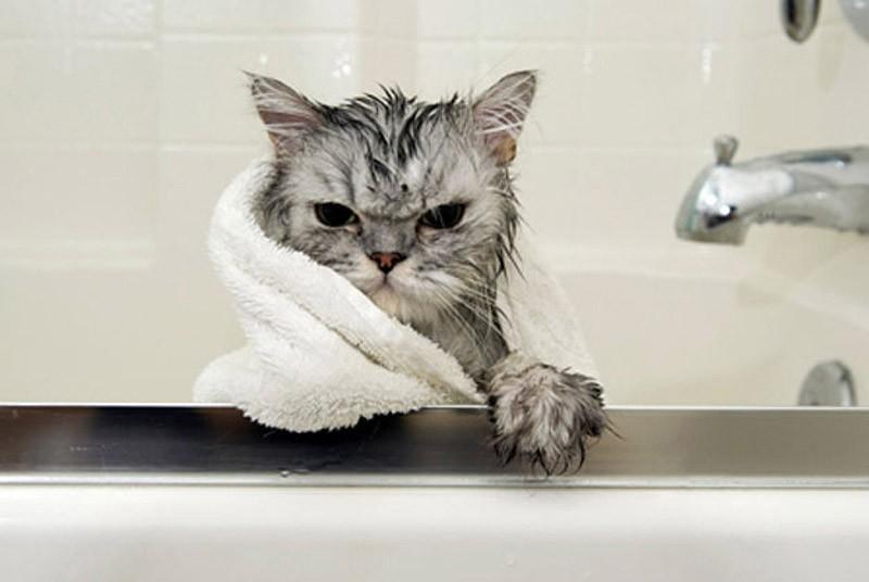 catvshedgehog02 Чем ежики лучше кошек