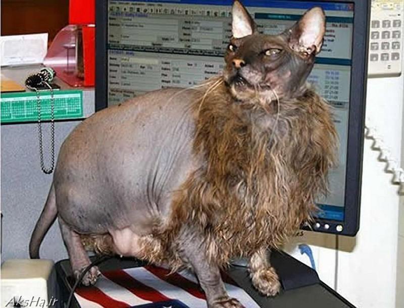 catvshedgehog06 Чем ежики лучше кошек