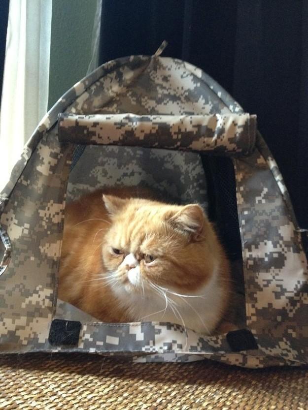 catvshedgehog08 Чем ежики лучше кошек