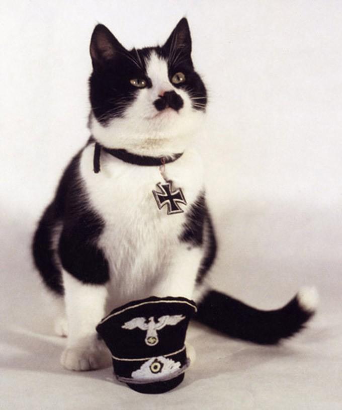catvshedgehog33 Чем ежики лучше кошек