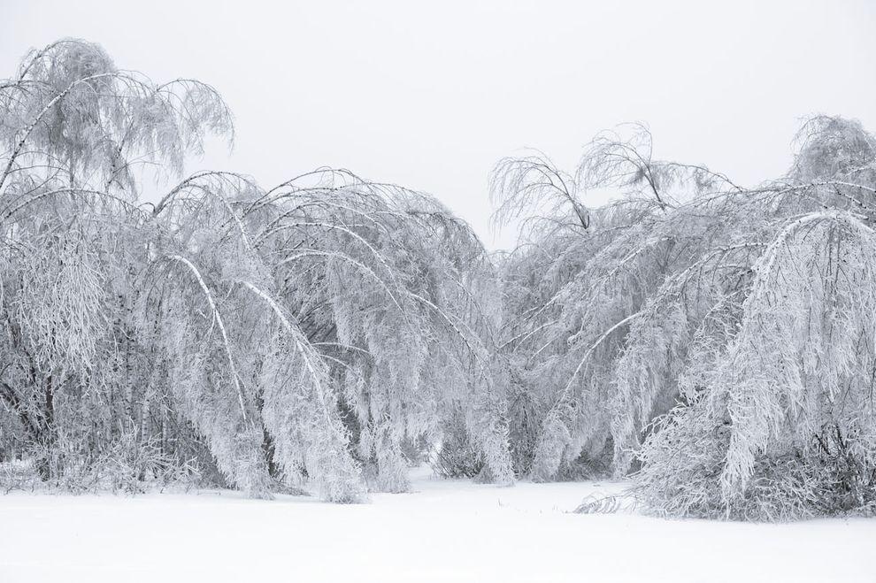 frozen04 Самые красивые фотографии морозной зимы
