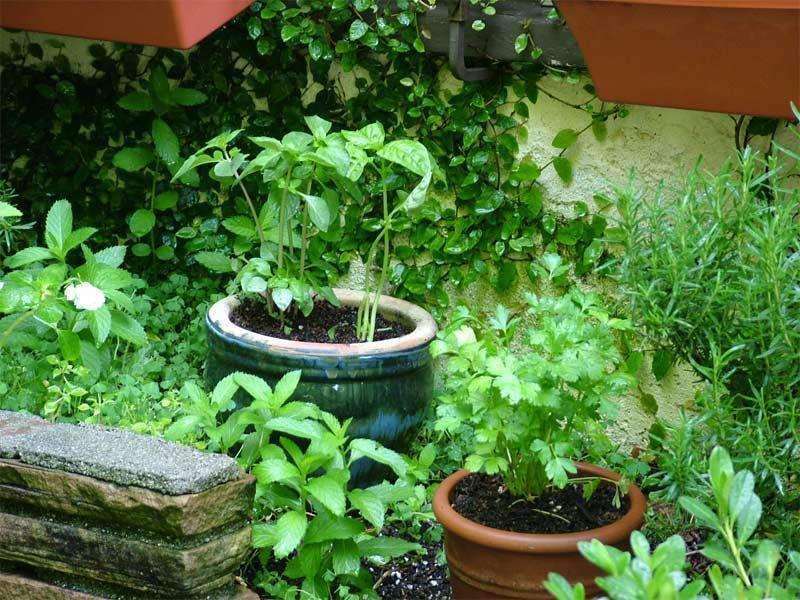 2. Выращивайте собственную зелень. Если в вашем доме свежая зелень будет под рукой, скорее всего, вы чаще будете готовить разнообразную и полезную пищу.