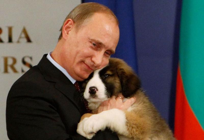 putin 800x551 20 самых ярких фотографий президента с животными