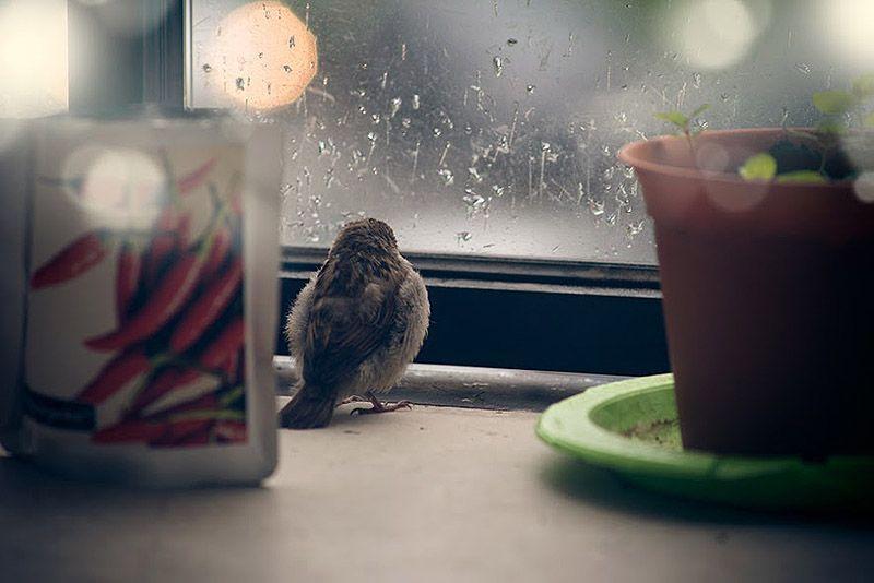 sparrow01 История о птенце воробья и человеческой доброте
