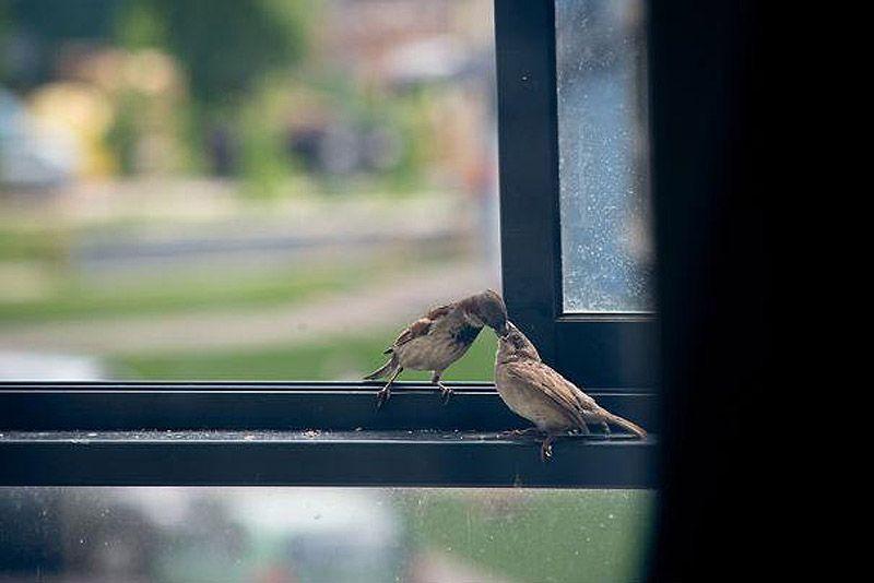 sparrow03 История о птенце воробья и человеческой доброте