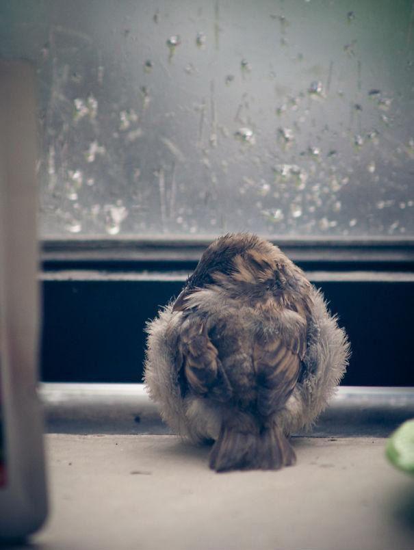 sparrow05 История о птенце воробья и человеческой доброте