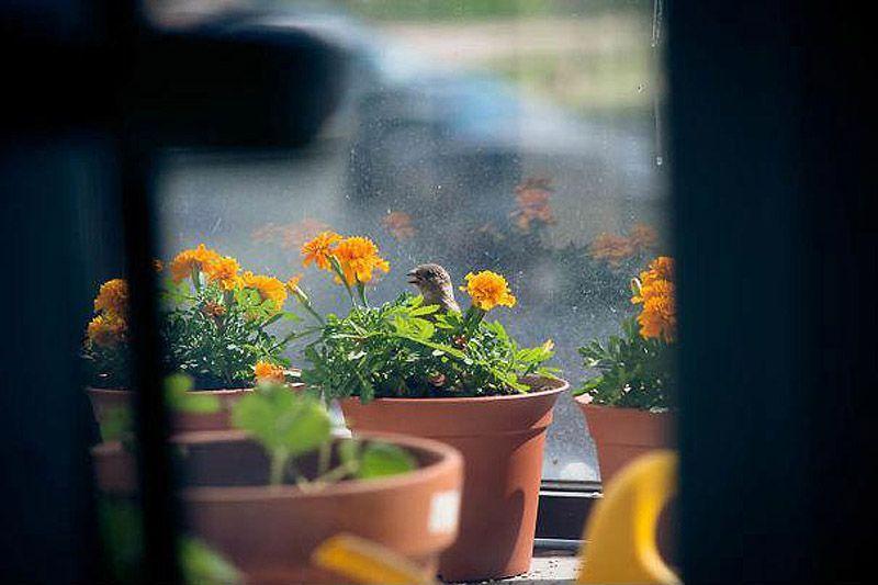 sparrow07 История о птенце воробья и человеческой доброте
