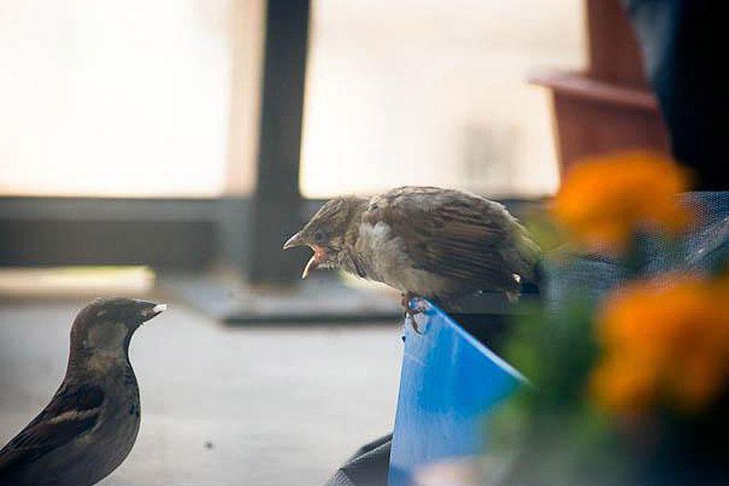 sparrow08 История о птенце воробья и человеческой доброте