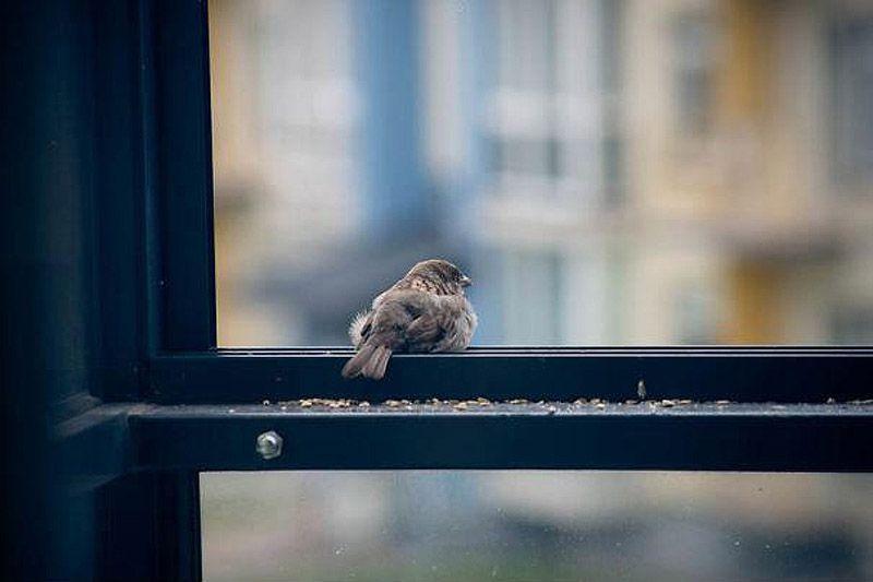 sparrow09 История о птенце воробья и человеческой доброте