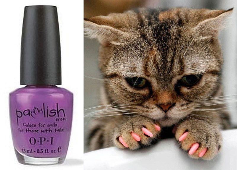wierd4cats11 Странные товары для кошатников