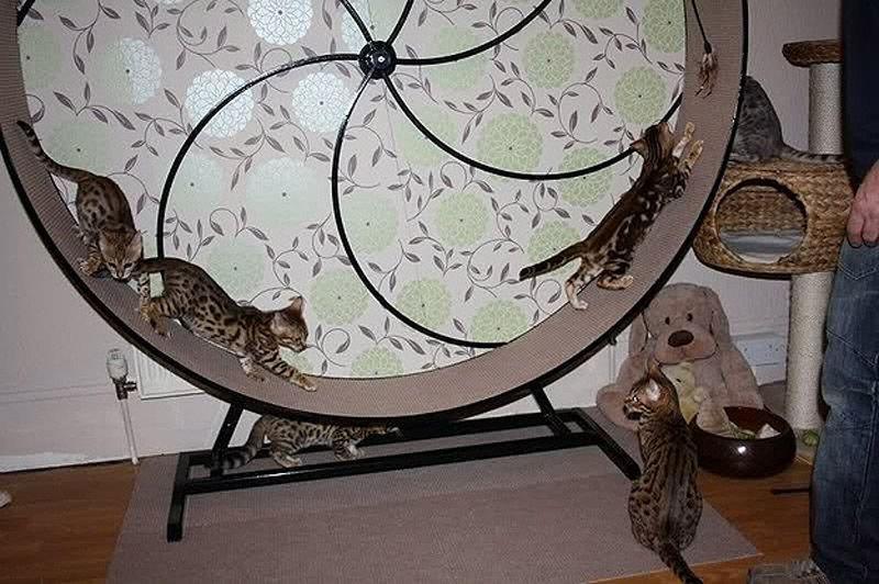 wierd4cats12 Странные товары для кошатников