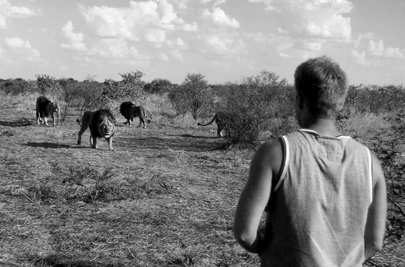withLions02 Как я жил со львами в Ботсване