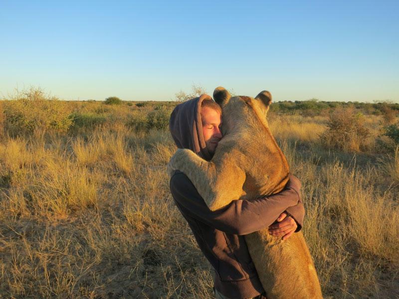 withLions04 Как я жил со львами в Ботсване