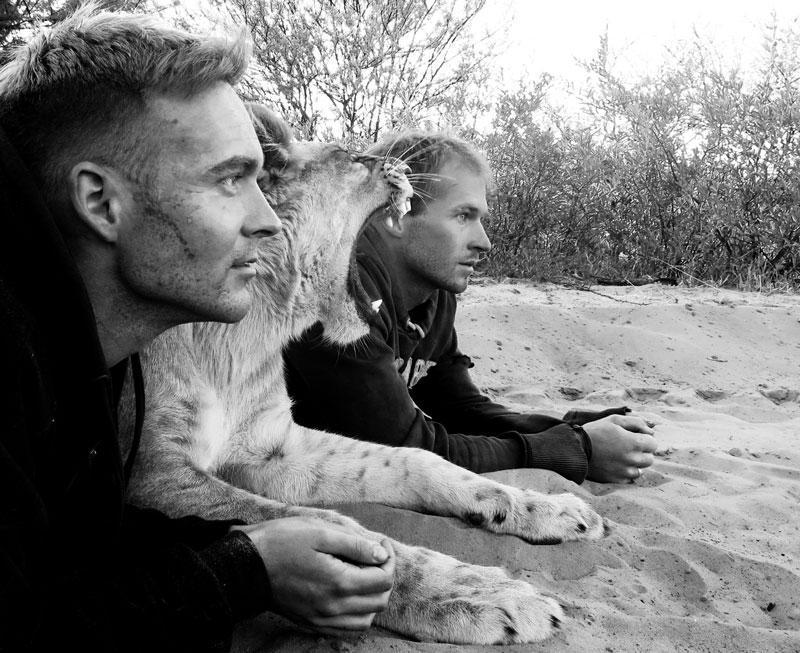 withLions05 Как я жил со львами в Ботсване
