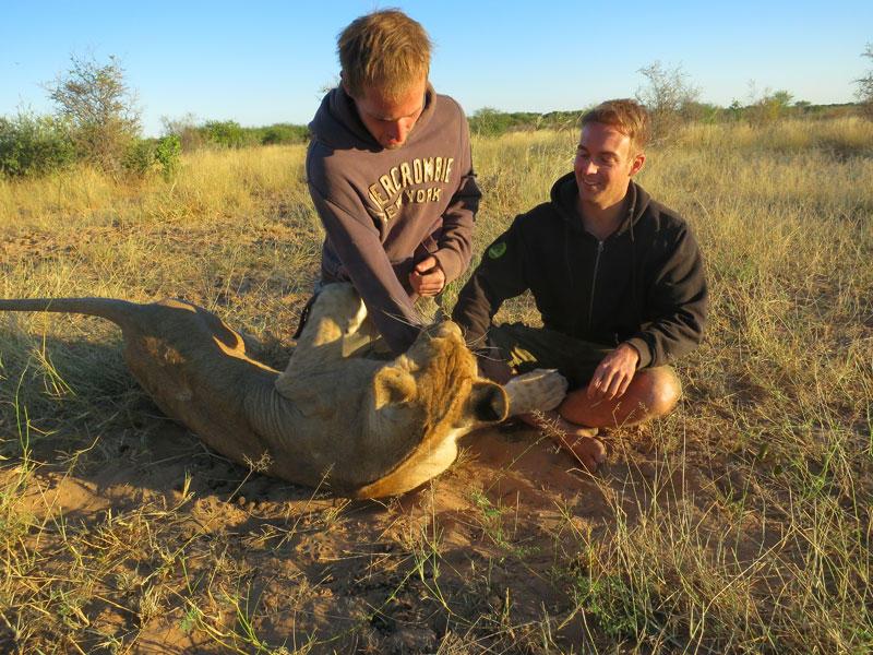 withLions07 Как я жил со львами в Ботсване