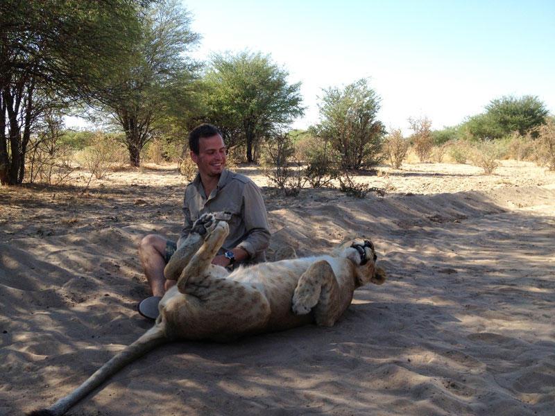 withLions15 Как я жил со львами в Ботсване