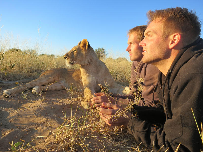 Как я жил со львами в Ботсване