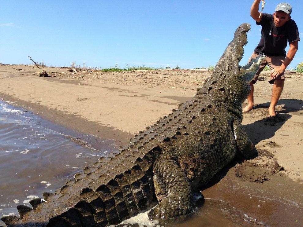 Croco01 Заклинатель крокодилов из Коста Рики