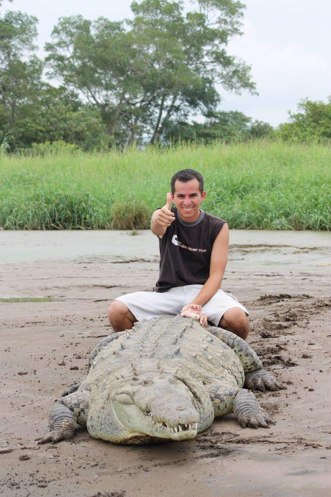 Croco02 Заклинатель крокодилов из Коста Рики